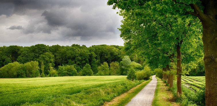 Rural Area around Münster